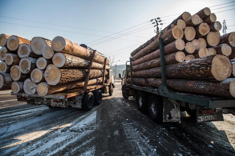 Минпромторг РФ планирует отказаться от экспортных квот на вывоз леса
